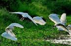 廣州騎行路線推薦:廣州南沙濕地公園騎行
